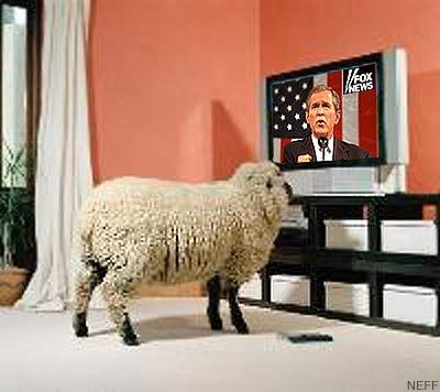 bush_sheep.jpg