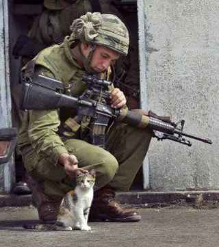 soldier%20cat.jpg